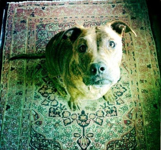 Собачья жизнь Джессики Бил