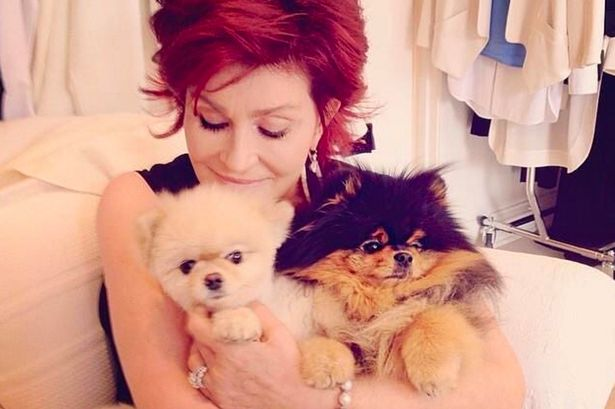 Sharon-Osborne-with-her-dogs-Bella-left-and-Rocky-right