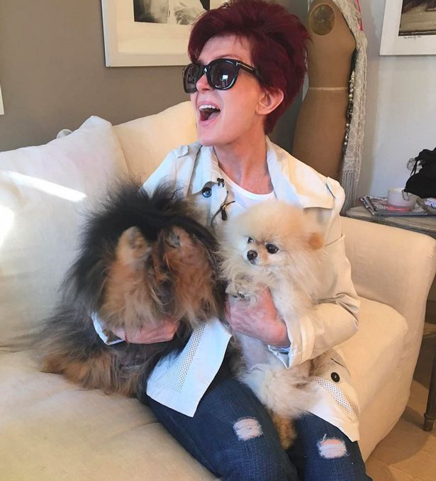 Sharon-Osborne-with-her-dogs-Rocky-left-and-Bella-right